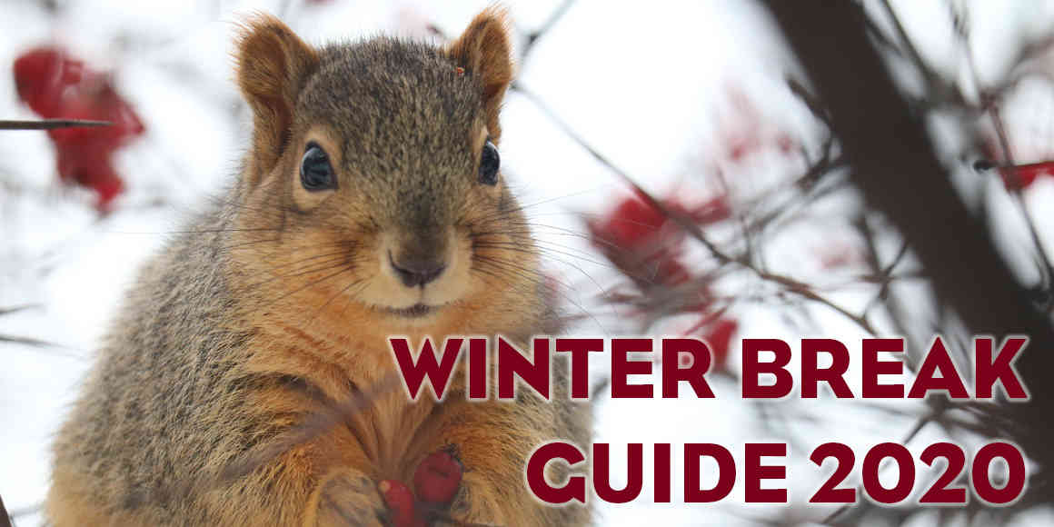 On a snowy winter day a plump squirrel eats red berries. Text reads